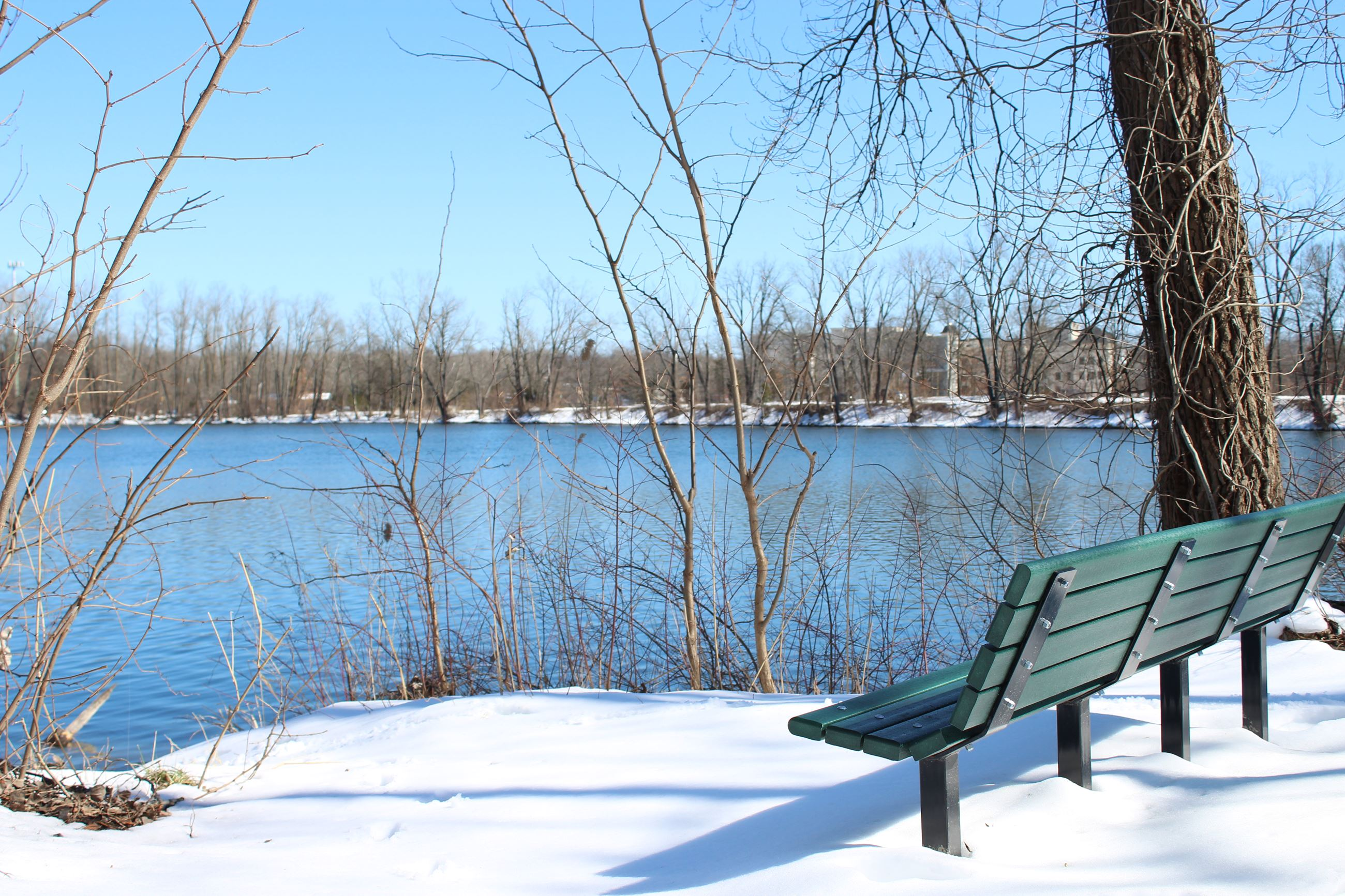 Woodland Lake Bench
